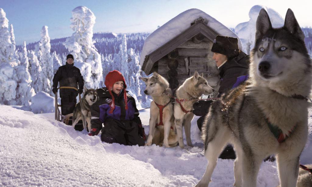 winter huskies